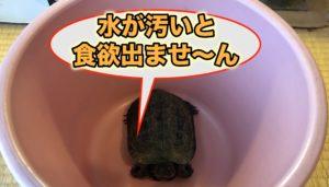 カメ クサガメ 食欲不振 餌食べない