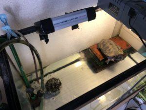 クサガメ飼育 ツインファン設置例