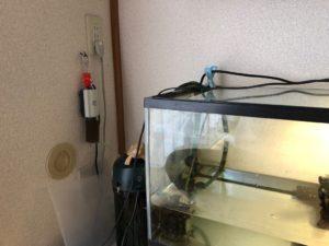クサガメ 水槽 電源 画像