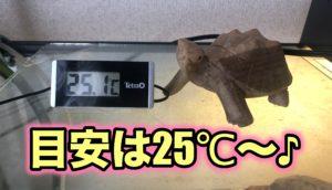 カメ ヒーター 温度