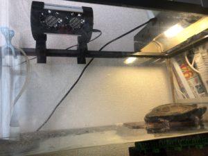 カメ水槽 扇風機設置例 クサガメ
