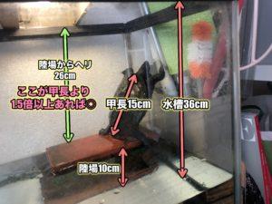 カメの脱走対策 水槽の高さに注意!