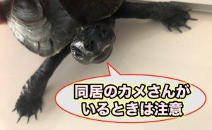 カメの爪が長いと怪我することも