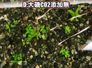 D:大磯CO2添加無