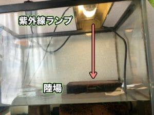 クサガメ 紫外線ランプ設置例